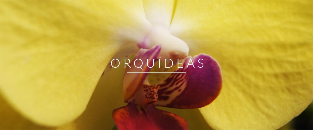 orquideas_img