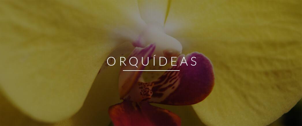 orquideas_img_hover