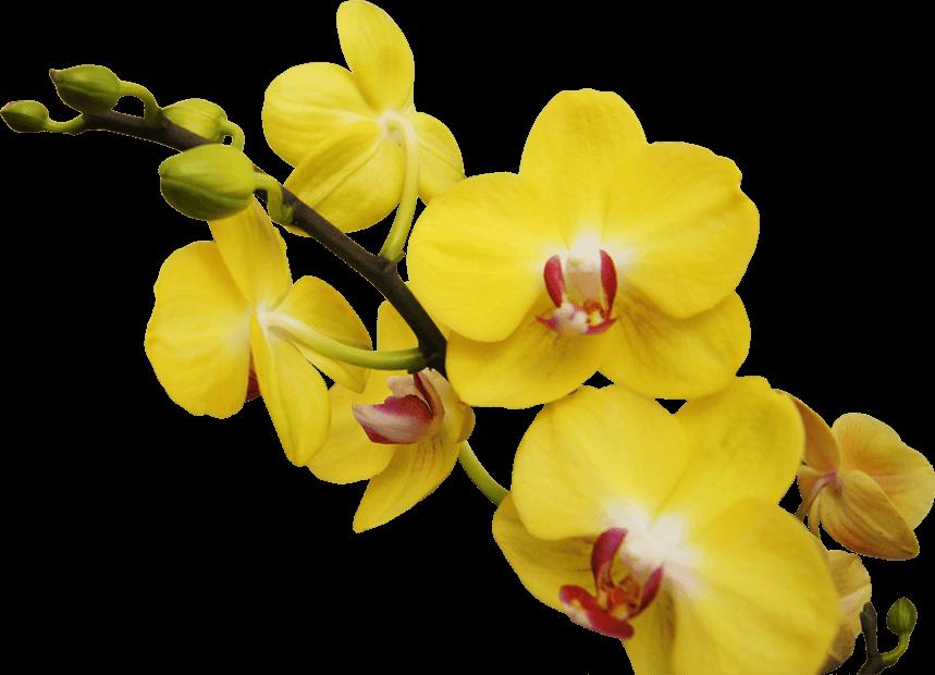 orquidea_centro