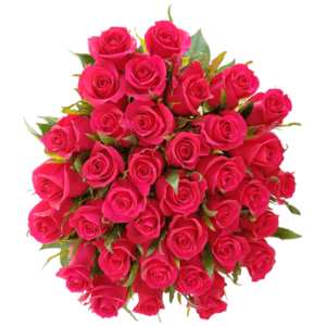rosas fuerte